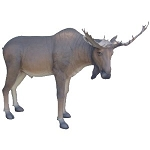 6.5' Tall Moose Life Size Statue