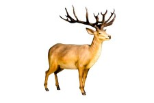 Life Like 6' Red Stag