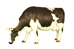 Life Like 5' Cow with Head Down